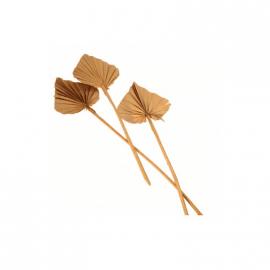 Fleurs séchées palmier camel x10