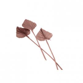 Fleurs séchées palmier terracotta