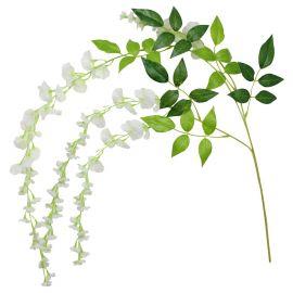Branches de glycines pour décorer